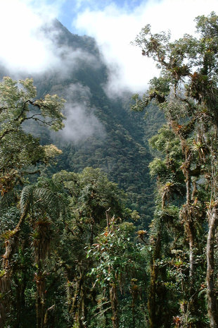 Virgin Cloud Forest in the Choco-Andes