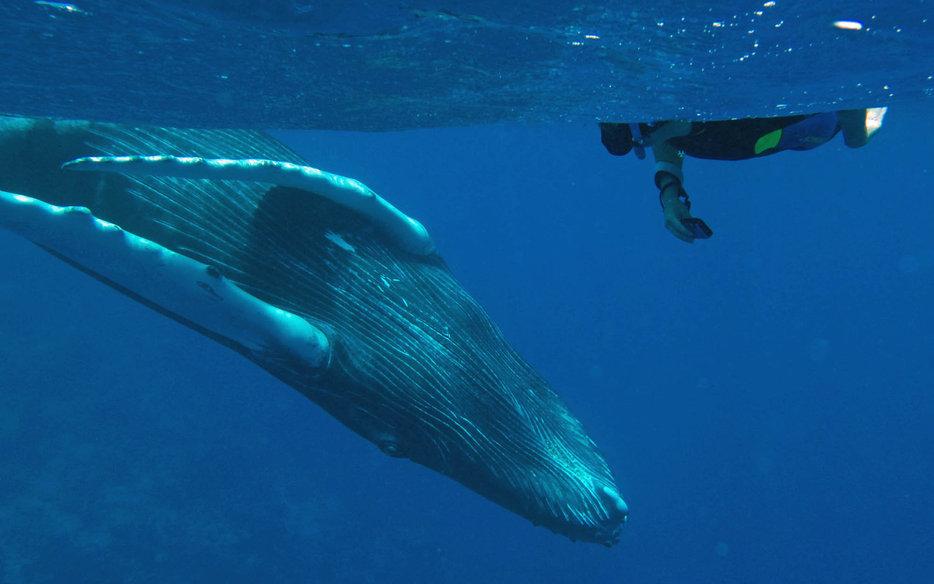 Dominican Republic Caribbean Island Silver Banks Humpback Whales Watching Snorkel Freediving Adventure Travel Holiday Rafting Kayak Trek