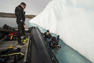 Divers by Iceberg in Greenland, Andrew Davies