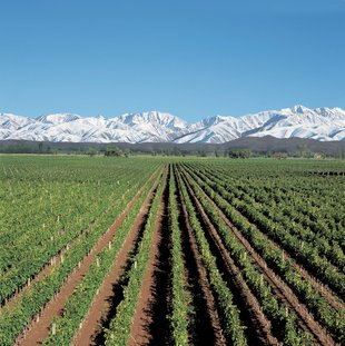 vineyards-mendoza-wine-grapes-patagonia.jpg