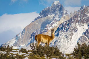 guanaco-wilderness-wildlife-patagonia-chile-torres-del-paine-holiday-adventure.jpg
