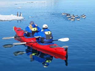 Kayaking with Guillemots in Spitsbergen - Ralph Pannell