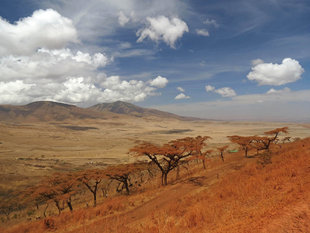 Ngorongoro Crater National Park - Ralph Pannell