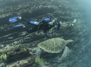 diver-turtle-photography-galapagos-marine-life-dr-simon-pierce.jpg