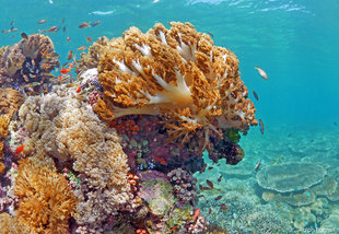 Hard-&-Soft-Corals-Komodo-shallow-reef-snorkel-underwater-photography-(c)-Ralph-Pannell-AQUA-FIRMA-dive-holiday-research-bleaching-2200.jpg