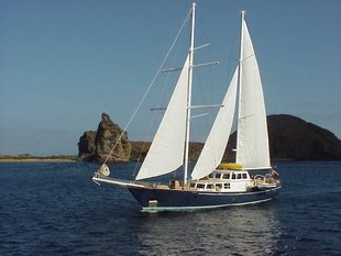 The Beagle Galapagos Sailing yacht wildlife marine life.JPG
