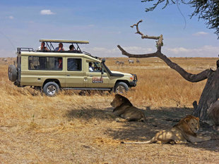 Wildlife Safari in Serengeti National Park