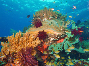 Coral Reefs of Raja Ampat in West Papua, Indonesia