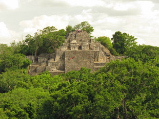 Calakmul Mayan temple ruins and Wildlife Mexico Guatemala - photography by Ralph Pannell (Aqua-Firma)