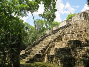 Mayan Temple at Calakmul - Ralph Pannell
