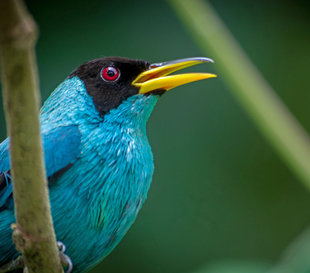 Birdwatching in Arenal Volcano National Park