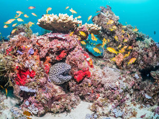 Coral Reef in Mafia Island - Dr Simon Pierce