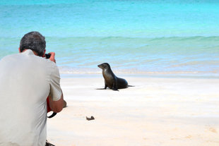 Sea-lion-photography-galapagos.jpg