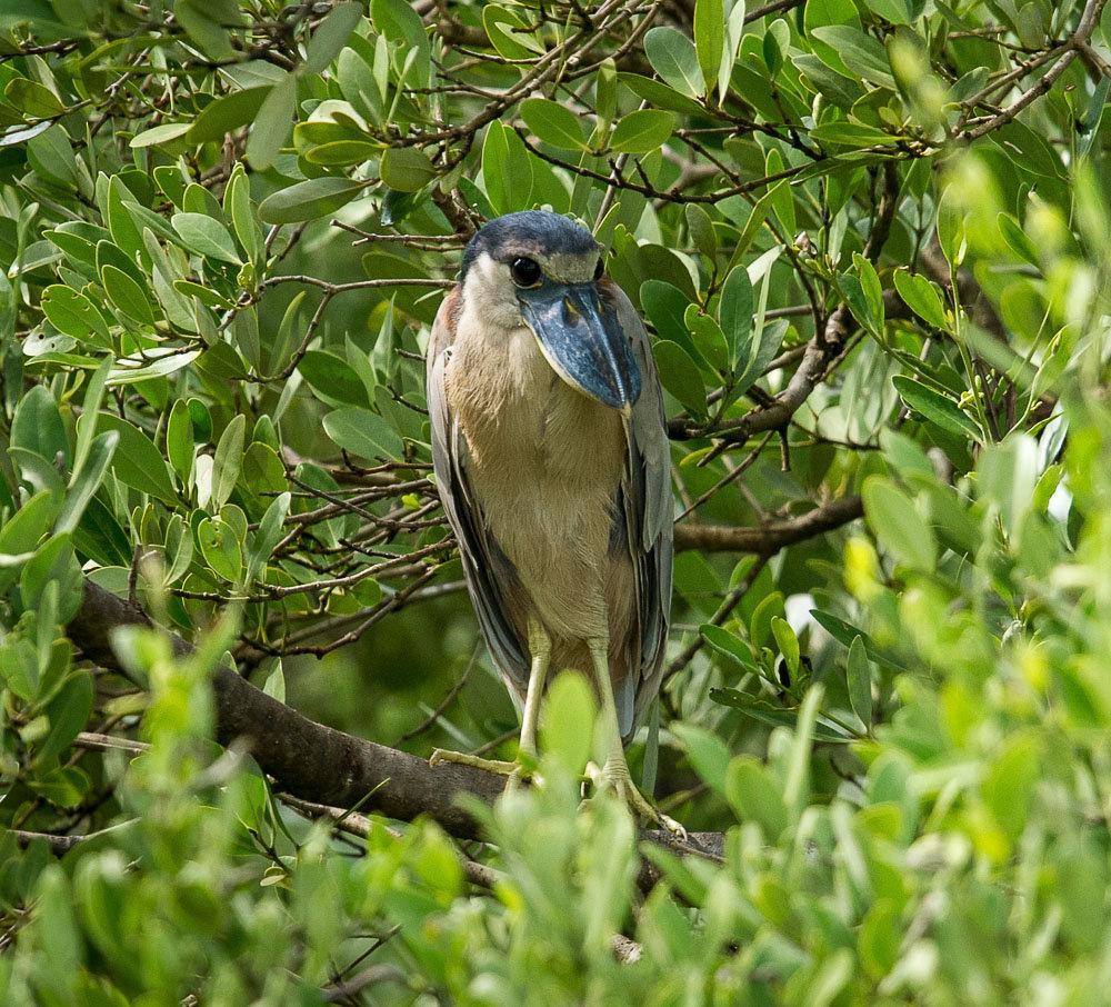 Yucatan Sian Ka'an Wildlife Mexico Maya Chichen Itza Coba