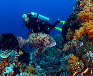 Komodo-Island-National-Park-Indonesia-coral-reef-dive-liveaboard-voyage-vacation-holiday-scuba-diving-adventure-travel-underwater-macro-photography.jpg