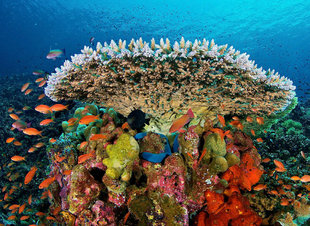 coral-reef-komodo-island-national-park-indonesia-dive-liveaboard-voyage-holiday-vacation-scuba-diving-adventure-travel-underwater-macro-photography.jpg