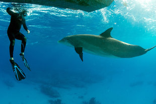 Snorkelling with Dolphins - Rob Smith