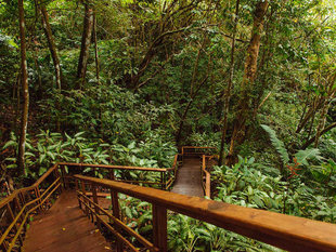 Rainforest Walkways in Osa Peninsula