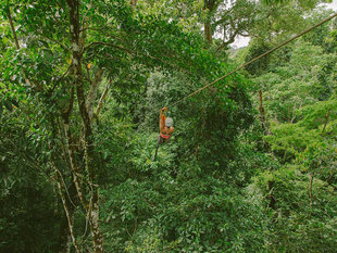Ziplining in Corcovado National Park