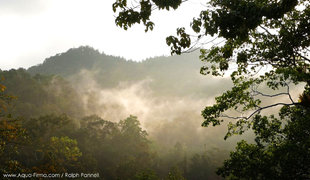 Sinharaja rainforest morning mist, Sri-Lanka