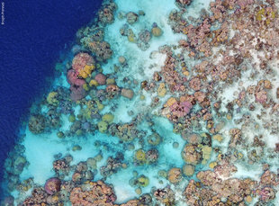 Coral Reef Surveys by Drone