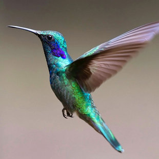 hummingbird-costa-rica-wildlife-birdwatching-photography-tailor-made-travel-holiday-vacation-hiking-adventure.jpg
