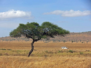 Aqua-Firma on safari in Serengeti National Park - Ralph Pannell