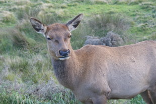 wildlife of easter island chile.jpg