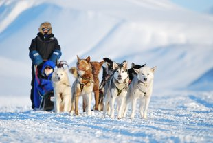 dogsledding-basecamp20explorer-photoby-kirsti-ikonen-6-preview.jpeg.jpg