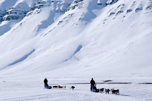 dogsledding-32-1000x667.jpg