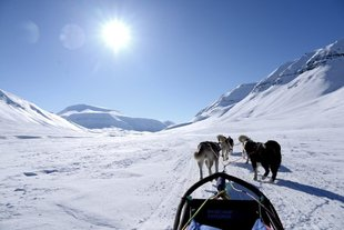dog-sleeding-high-arctic-wilderness-adventure-northern-lights.jpg
