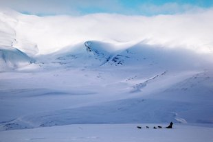 dogsledding_dogsledding_photovg_3-1000x667.jpg