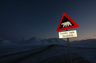 spitsbergen-svalbard-polar-bear-expedition.jpg