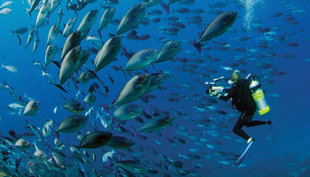 Diving at Cape Kri, Raja Ampat - Hamid Rad