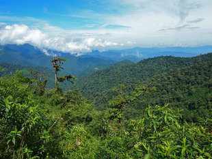 Ecuador's Choco Andes Cloud Forest Views between Yunguillas and Santa Lucia Photograph by Roly Pitts