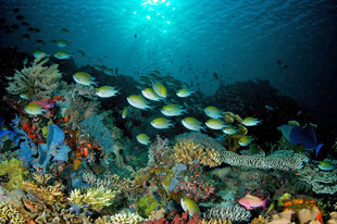 night-dive-coral-reef-komodo-island-national-park-indonesia-dive-liveaboard-voyage-holiday-vacation-scuba-diving-adventure-travel-underwater-macro-photography.jpg