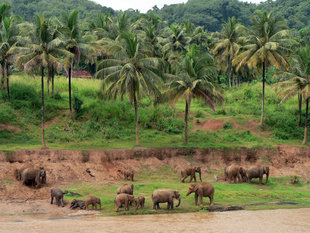 Elephant Sanctuary in Udawalawe National Park, Sri Lanka