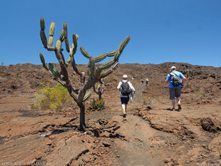 Trekking from Cerro Chico - a parasitic cone on the Sierra Negra Volcano, Isabela Island, Galapagos