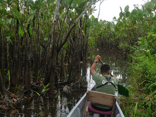 Paddling-the-Amazon-Ecuador-rainforest-Aqua-Firma-wildlife-guide-swamp-forest-Ralph-Pannell.jpg