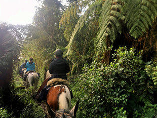 Horseback Riding into the Cloud Forest in Ecuador