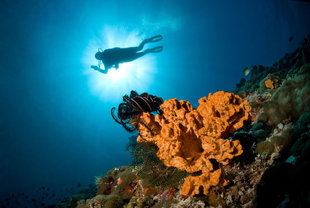 Maldives Dive Liveaboard - South Central and Deep South Atolls