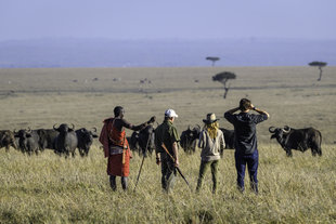 Walking Safaris in the Masai Maria Reserve