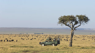 Safari Drive across savanna plains of the Masai Mara Reserve