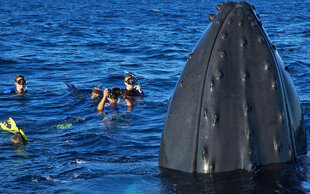 snorkelling-with-humpback-whale-silver-bank-watching-voyage-yacht-cruise-adventure-sanctuary-photography-caribbean-puerto-plata-dominican-republic.jpg