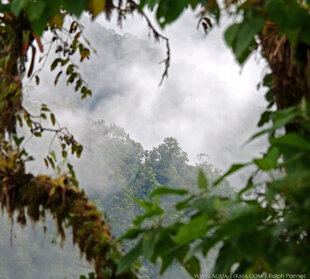 Choco-Andes Cloud Forest in Ecuador