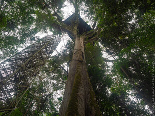 Canopy Tower in the Amazon