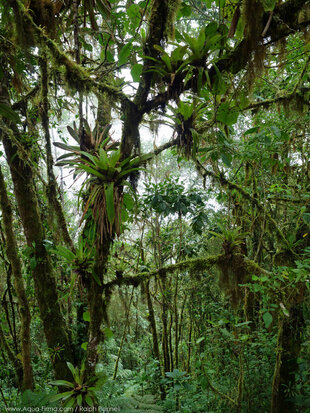 Cloud Forests of Ecuador Choco Andes