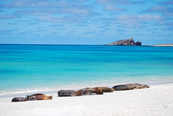 Galapagos Multisport holiday - Sealions on white sand beach