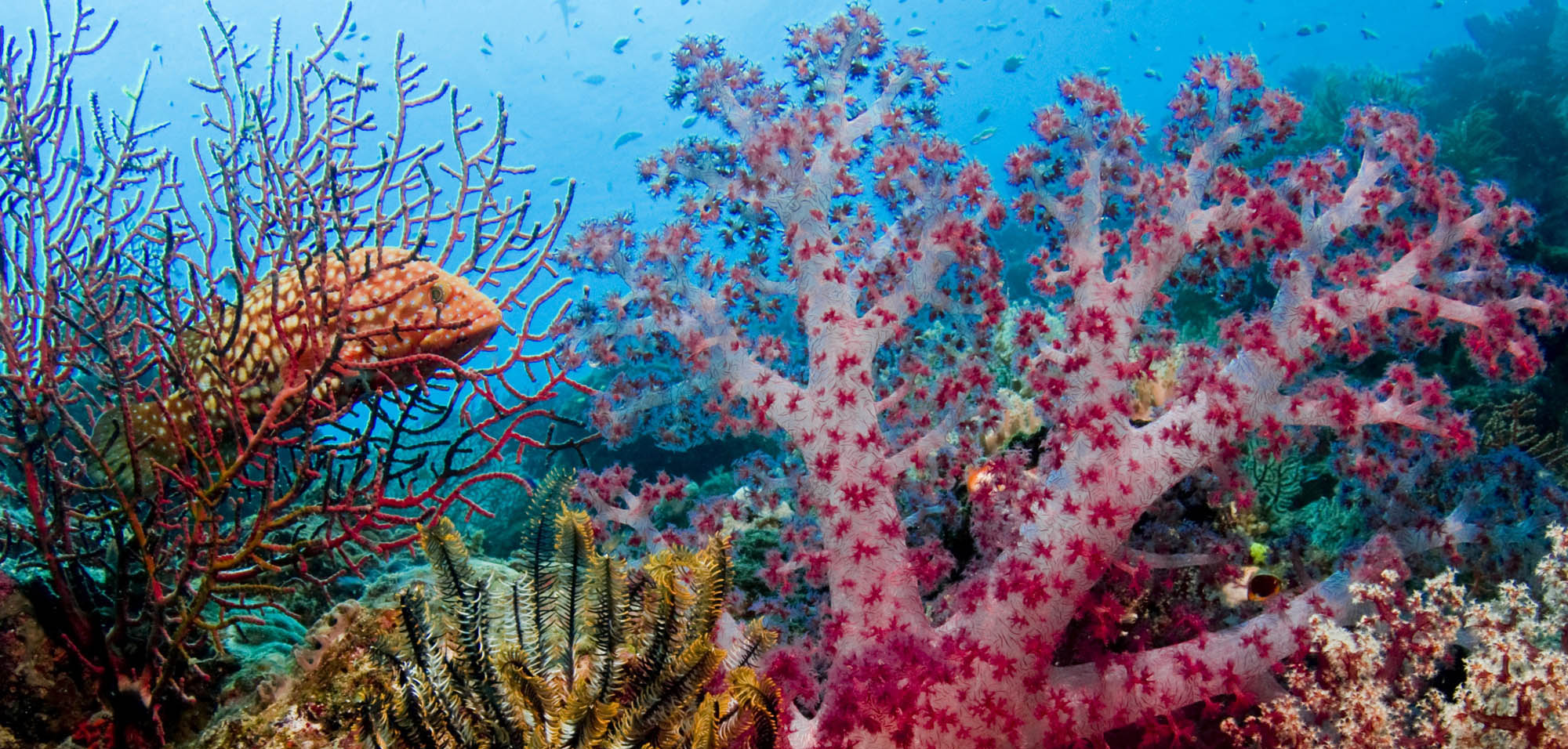 Coral Reef in New Ireland