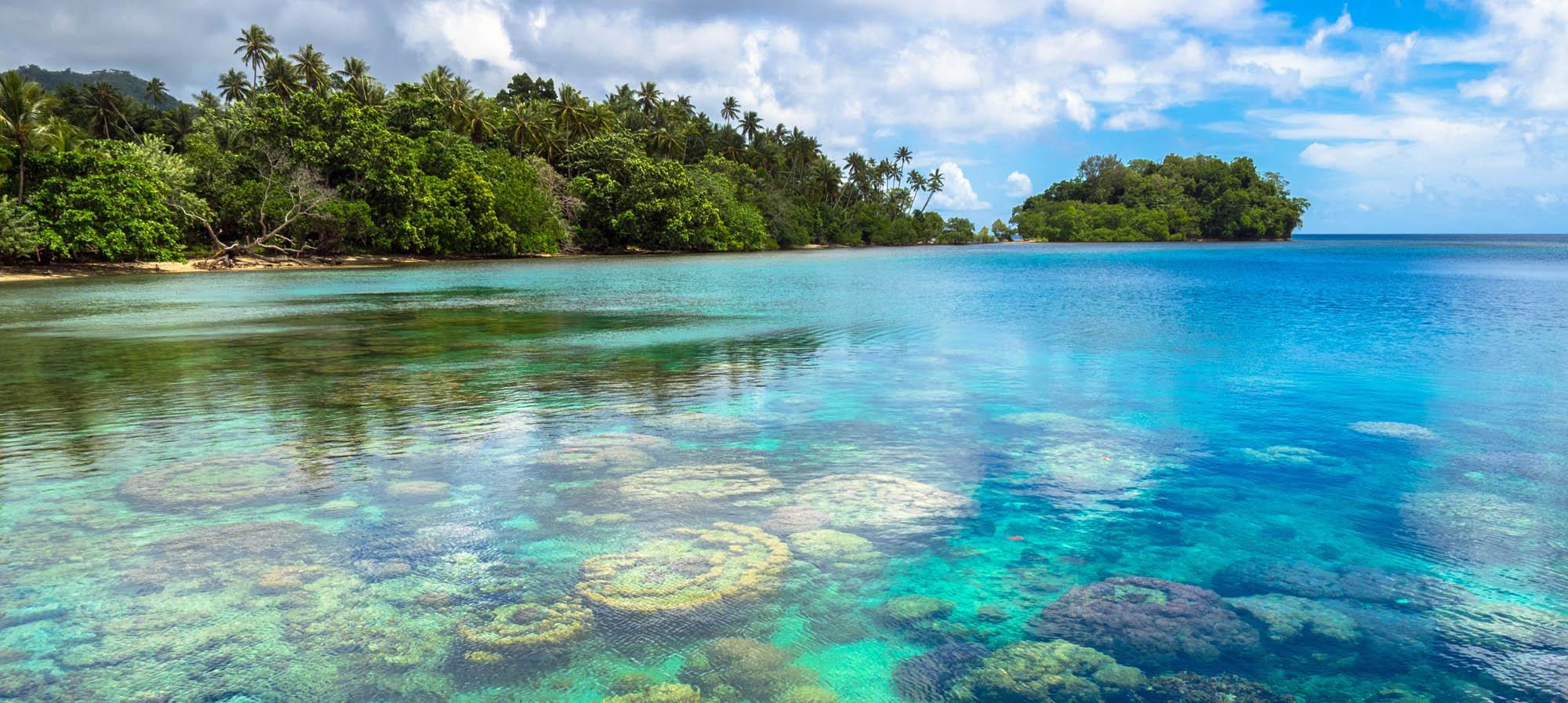 Papua New Guinea Wildlife Marine Life Rainforest Holiday Dive Birdwatching Snorkel Bird Of Paradise New Britain Ireland